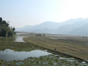 The rice patty fields
