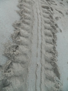 Her tracks left in the sand