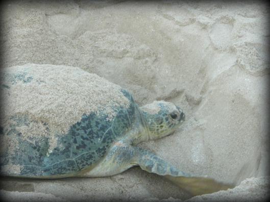 turtle trip 10