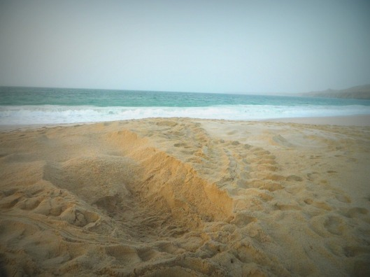 An empty turtle nest near the ocean