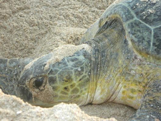 turtle trip 12
