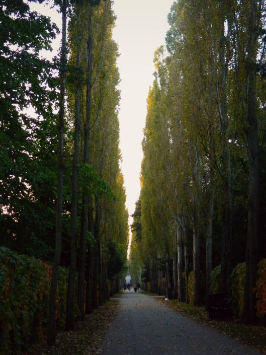 Copenhagen Trees